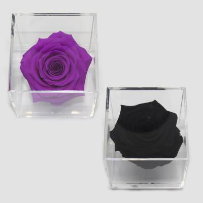 Rosa en cubo de acrílico
