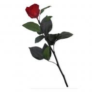 Rosa con tallo
